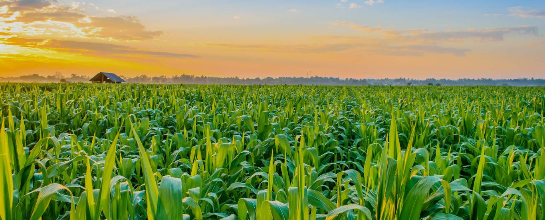 Empresa ecuatoriana es la mejor en buenas prácticas agrícolas del mundo